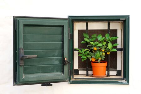 Lime tree in the window in Locorotondo town in Italy, Apulia region, Adriatic Sea Banque d'images