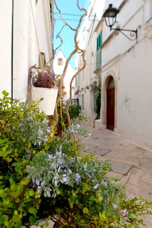 Street in Locorotondo town, Italy, region of Apulia, Adriatic Sea - blooming flowers in the foreground