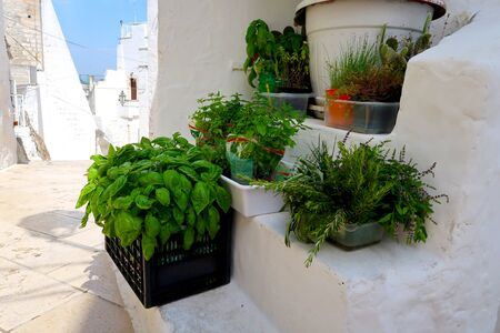 Fresh herbs in pots on the stairs of the street in Ostuni town,  Apulia region, Italy, Adriatic Sea Stockfoto - 139228216