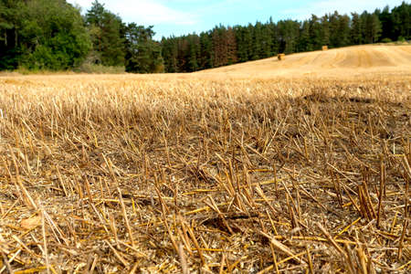 Harvested late summer grain field with hay packs near Slavonice, Czech Republic, bohemian region