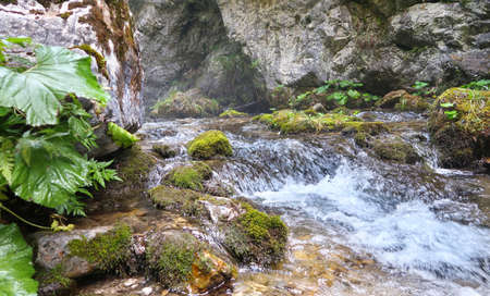 Wild river in the canyon in Prosiecka Valley (Prosiecka dolina) in summertime, northern Slovakia, Europe Stockfoto