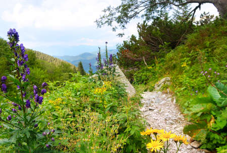 Wild nature in Low Tatras (Nizke Tatry) on the way from Chopok mountains. Landscape scenery with colorful flowers and green grass. Summertime in the Northern Slovakia, Slovak Republic, Europe. Stok Fotoğraf - 163611492