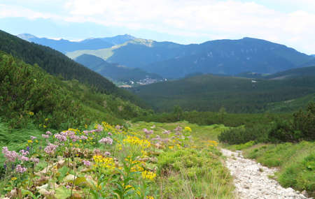 Wild nature in Low Tatras (Nizke Tatry) on the way from Chopok mountains. Landscape scenery with colorful flowers and green grass. Summertime in the Northern Slovakia, Slovak Republic, Europe.