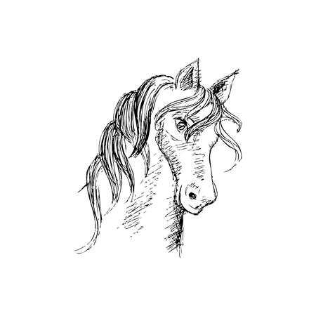 Hand Zeichnung Pferd Kopf Standard-Bild - 74634445
