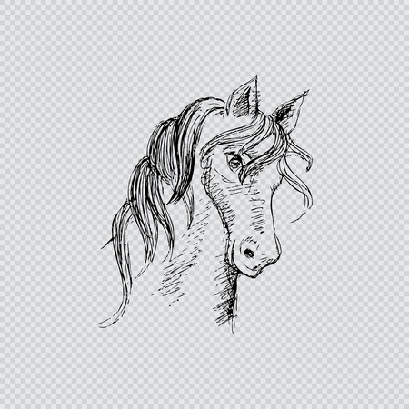 Hand drawing horse head Illustration