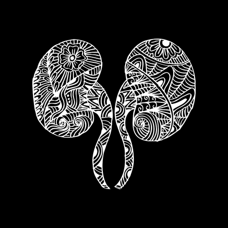 Human kidneys. Doodle style.