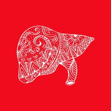 human liver: Human liver in doodle style.