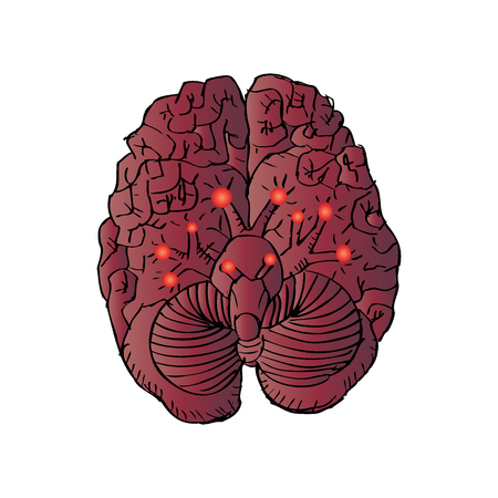 Cranial Nerves Illustration