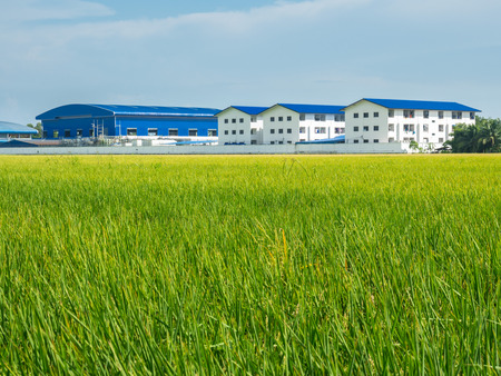 developing country: Green rice field and factory in developing country