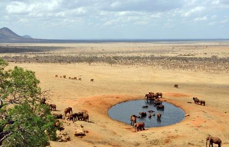 pozo de agua: Grupo de elefantes en una charca Foto de archivo