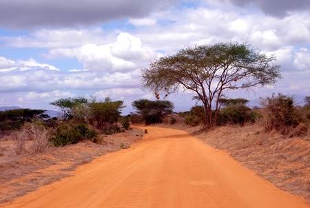 dusty: Dusty road in a African national park Stock Photo
