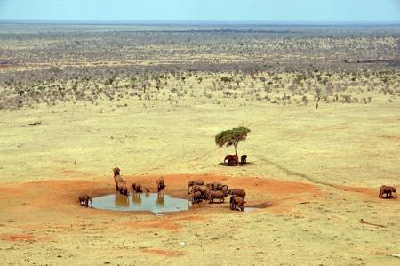 pozo de agua: Grupo de los elefantes en una charca