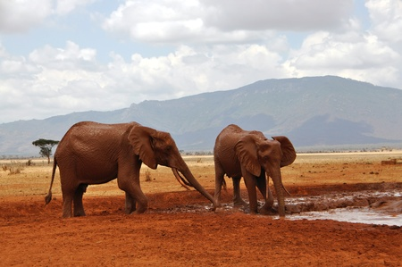 waterhole: African elephants at a waterhole