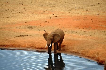 pozo de agua: Elefante africano en un pozo de agua Foto de archivo