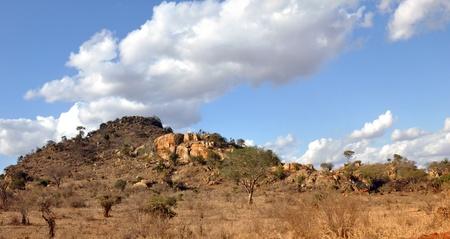 tsavo: African wildlife