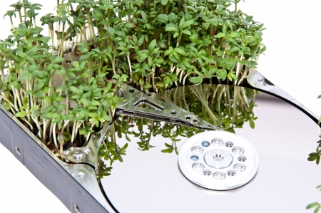 Hard disk drive with Garden Cress (Lepidium Sativum) photo