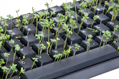 Black keyboard with garden cress photo