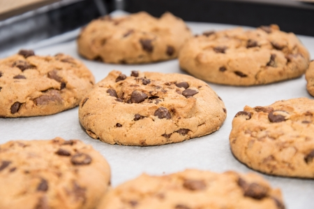 chocolate cookie: Las galletas de chocolate caseras en una plancha