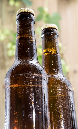 Two wet bottles of Beer decorated with Hops on wooden background Stock Photo - 15469809