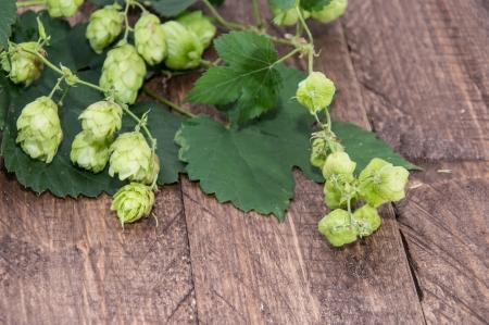 lupulus: Hop (Humulus lupulus) on wooden background