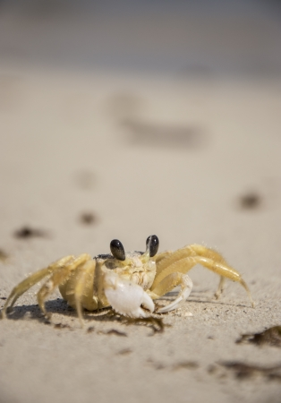 Small Crab on the Beach (macro shot) photo