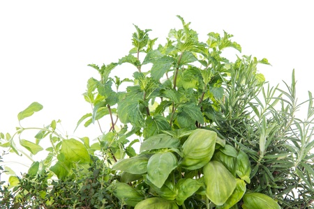Herb Garden isolated on white background photo