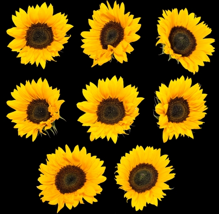 Collage with Sunflowers photo