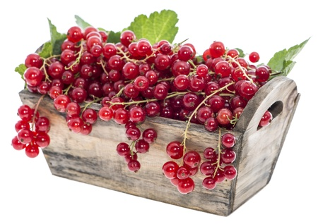red currants: Fresh harvested Red Currants isolated on white background