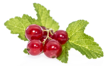 red currants: Red Currants isolated on white background