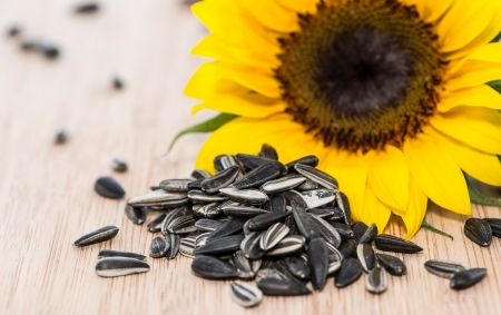Sunflower with Seeds on wooden background  photo