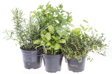 Herb Garden isolated on white  Stock Photo - 22789469