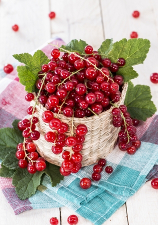 red currants: Fresh harvested Red Currants