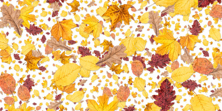 autum: Leaves background isolated on white