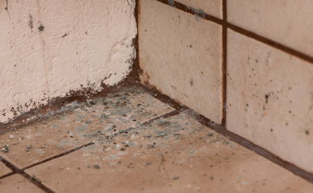 mold: Mildewed walls with different sorts of mold (close-up shot) Stock Photo