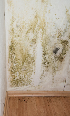 Mildewed walls with different sorts of mold (close-up shot) photo