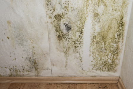 Mildewed walls with different sorts of mold (close-up shot) Stock Photo