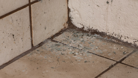sorts: Mildewed walls with different sorts of mold (close-up shot) Stock Photo