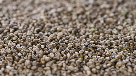 hemp hemp seed: Hemp Seeds close-up picture for use as background image or as texture