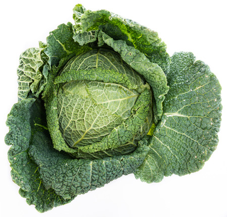 savoy cabbage: Savoy Cabbage (close-up shot) isolated on white background