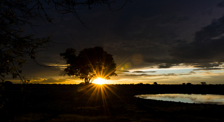 waterhole: Puesta del sol en �frica con un pozo de agua en la parte delantera (Parque Nacional de Etosha, Namibia) Foto de archivo