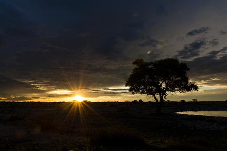 at waterhole: Puesta del sol en África con un pozo de agua en la parte delantera (Parque Nacional de Etosha, Namibia) Foto de archivo