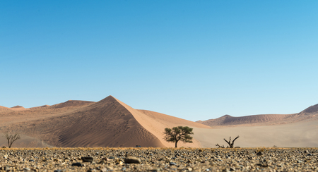 namib: Low angle shot of dunes in the Namib Desert (Namibia)