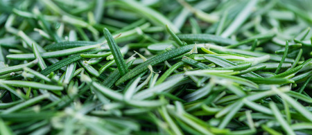 green herbs: Portion of fresh Rosemary as a detailes close-up shot (selective focus) on wooden background Stock Photo