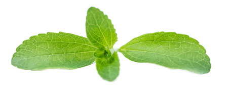steviol: Portion of Stevia leaves (selective focus; detailed close-up shot) isolated on white background