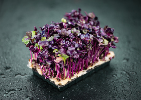 Some fresh Cress on a vintage slate slab (selective focus; close-up shot) Stock Photo