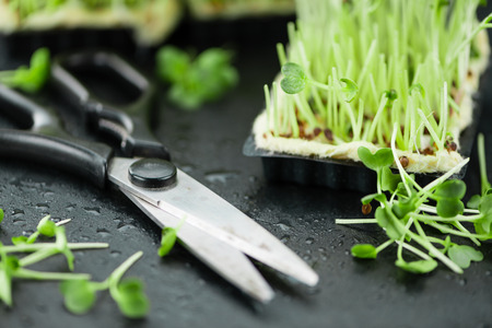 berro: Portion of fresh Cutted Cress (close-up shot; selective focus)