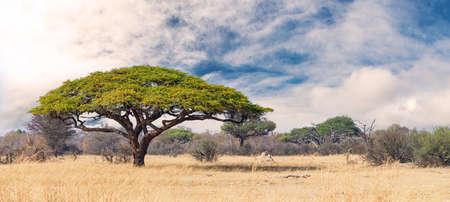 African landscape in the Hwange National Park, Zimbabwe at a sunny day Reklamní fotografie