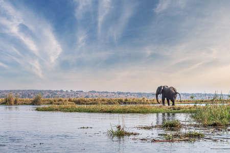 Elephants spotted in the Chobe National Park, Botswana