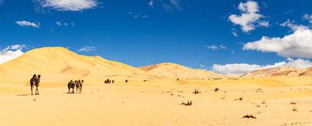 Group of dromedaries in the beautiful Omani Rub al-Chali Desert