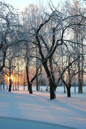 Frosty winter sunrise, the sun appear through trees. photo